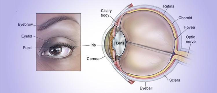 جراحی تومور حدقه چشم